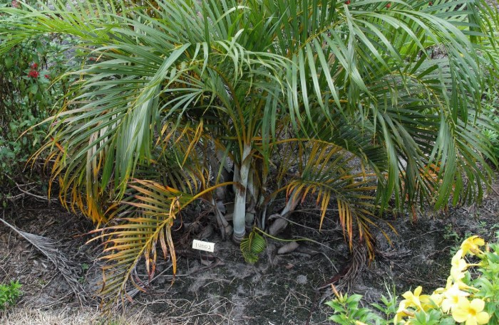 What is the Best Fertilizer for Palm Trees?